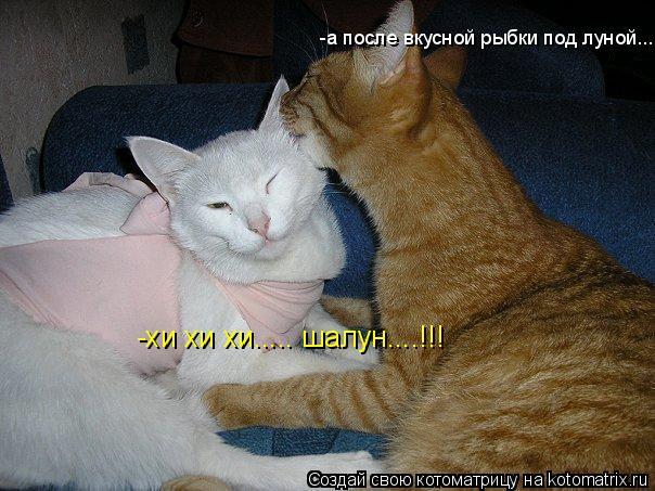 Котоматрица: -хи хи хи..... шалун....!!! -а после вкусной рыбки под луной...