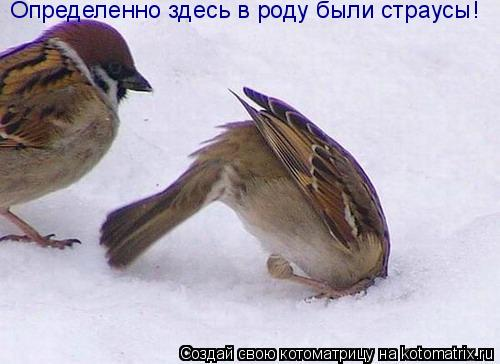 Котоматрица: Определенно здесь в роду были страусы!
