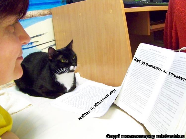 Котоматрица: Как ухаживать за кошками Как нашкодить людям