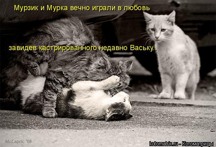 Котоматрица: Мурзик и Мурка вечно играли в любовь  завидев кастрированного недавно Ваську..