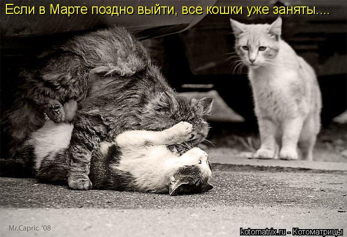 Котоматрица: Если в Марте поздно выйти, все кошки уже заняты....