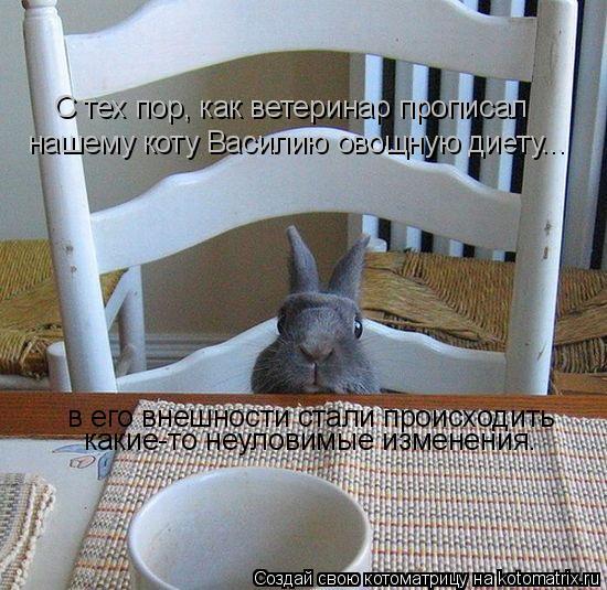 Котоматрица: С тех пор, как ветеринар прописал нашему коту Василию овощную диету... в его внешности стали происходить какие-то неуловимые изменения.