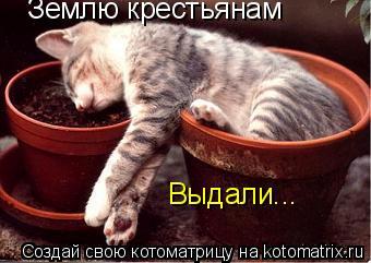 Котоматрица: Землю крестьянам  Выдали...