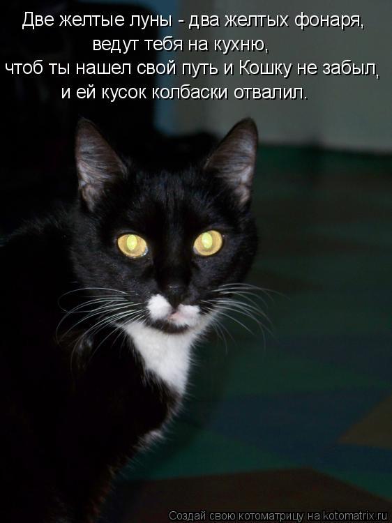 Котоматрица: чтоб ты нашел свой путь и Кошку не забыл  и ей кусок колбаски отвалил. ведут тебя на кухню, , Две желтые луны - два желтых фонаря,