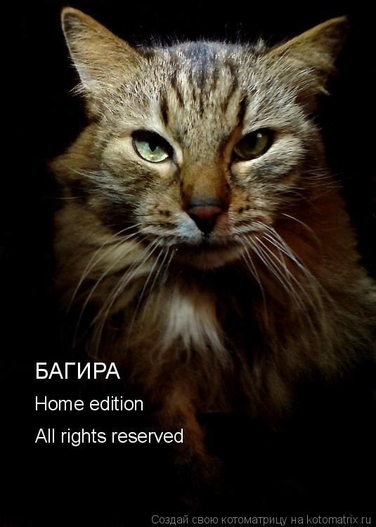 Котоматрица: БАГИРА Home edition All rights reserved