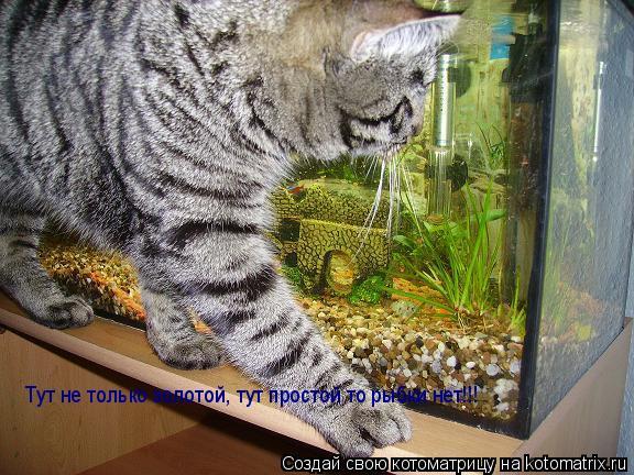 Котоматрица: Тут не только золотой, тут простой то рыбки нет!!!