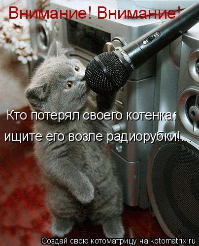 Котоматрица: Внимание! Внимание! Кто потерял своего котенка: ищите его возле радиорубки!...