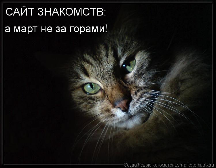 Котоматрица: САЙТ ЗНАКОМСТВ: а март не за горами!