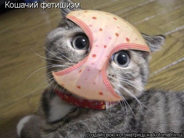Котоматрица: Кошачий фетишизм