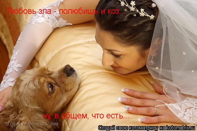 Котоматрица: Любовь зла - полюбишь и коз... ну, в общем, что есть...
