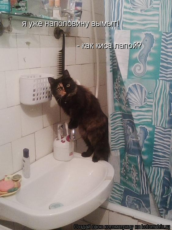 Котоматрица: я уже наполовину вымыт! - как киса лапой?