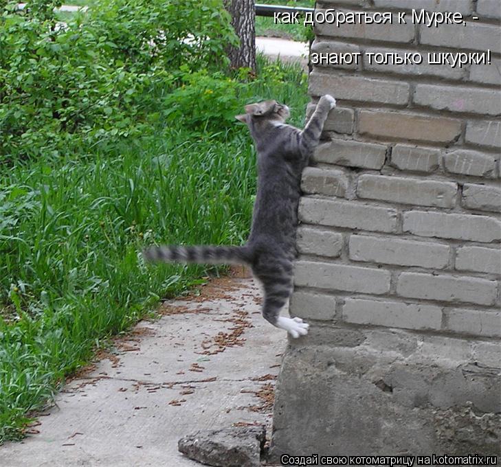 Котоматрица: как добраться к Мурке, - знают только шкурки!