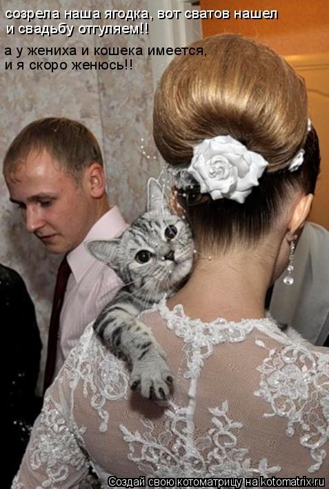 Котоматрица: созрела наша ягодка, вот сватов нашел  и свадьбу отгуляем!! а у жениха и кошека имеется,  и я скоро женюсь!!