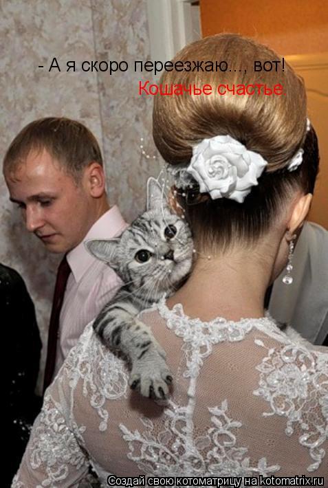 Котоматрица: - А я скоро переезжаю..., вот! Кошачье счастье.