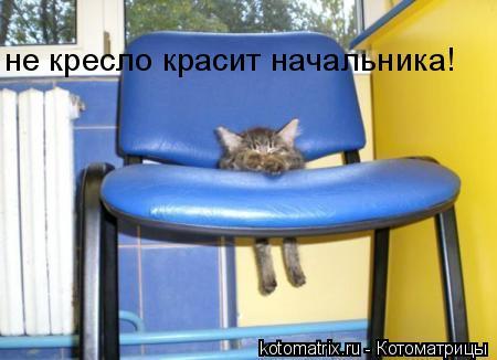 Котоматрица: не кресло красит начальника!