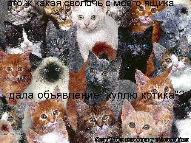 """Котоматрица: это ж какая сволочь с моего ящика  дала объявление """"куплю котика""""?"""