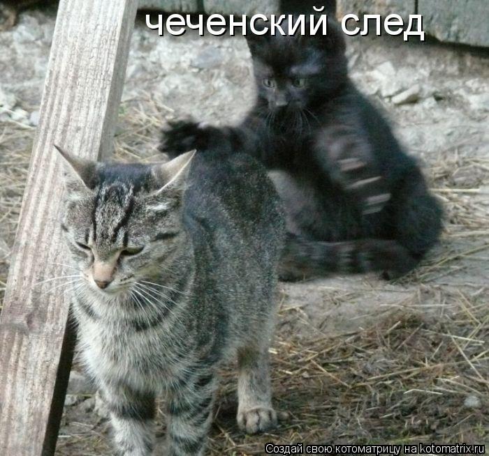 Котоматрица: чеченский след