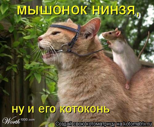 Котоматрица: мышонок нинзя, ну и его котоконь