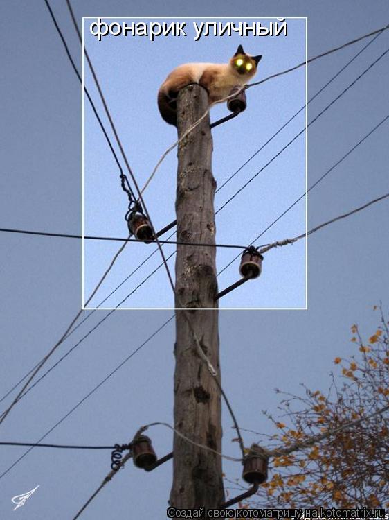 Котоматрица: фонарик уличный