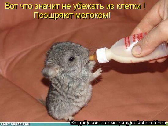 Котоматрица: Вот что значит не убежать из клетки ! Поощряют молоком!