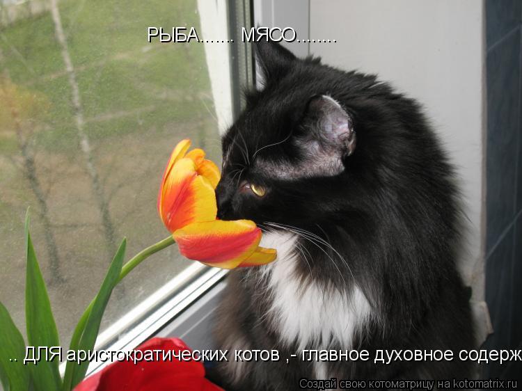 Котоматрица: РЫБА....... МЯСО........  .. ДЛЯ аристократических котов ,- главное духовное содержание