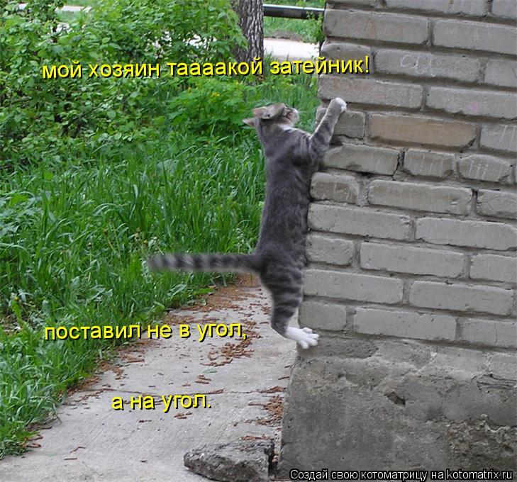 Котоматрица: мой хозяин таааакой затейник! поставил не в угол,  а на угол.