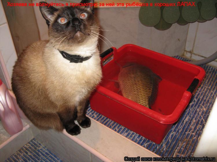 Котоматрица: Хозяева не волнуйтесь я присмотрю за ней эта рыбёшка в хороших ЛАПАХ