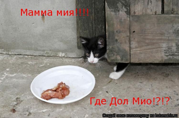 Котоматрица: Мамма мия!!!! Где Дол Мио!?!?