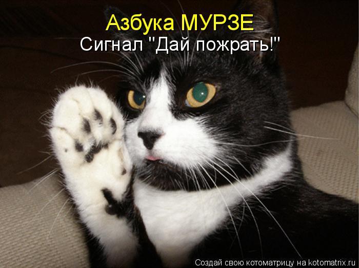"""Котоматрица: Азбука МУРЗЕ Сигнал """"Дай пожрать!"""""""