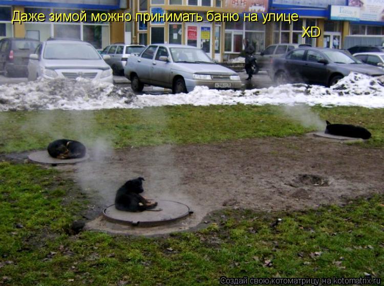 Котоматрица: Даже зимой можно принимать баню на улице XD