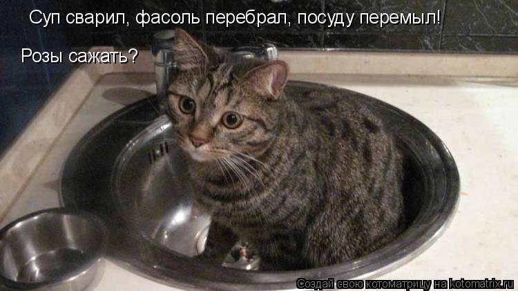 Котоматрица: Суп сварил, фасоль перебрал, посуду перемыл! Розы сажать?