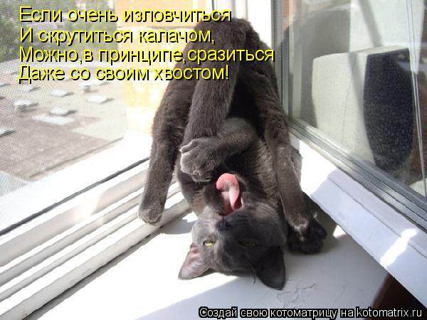 Котоматрица: Если очень изловчиться И скрутиться калачом, Можно,в принципе,сразиться Даже со своим хвостом!