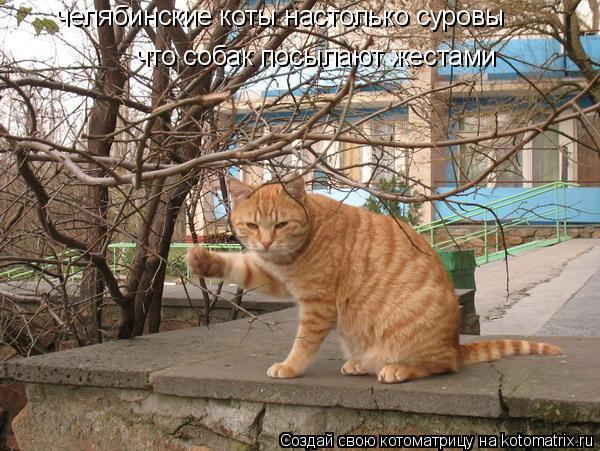 Котоматрица: челябинские коты настолько суровы что собак посылают жестами