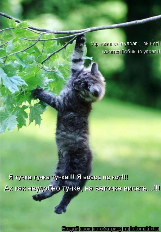 Котоматрица: Я тучка тучка тучка!!! Я вовсе не кот!!! кажется Бобик не удрал!!! Уф, кажется я удрал... ой нет!!! Ах как неудобно тучке, на веточке висеть...!!!