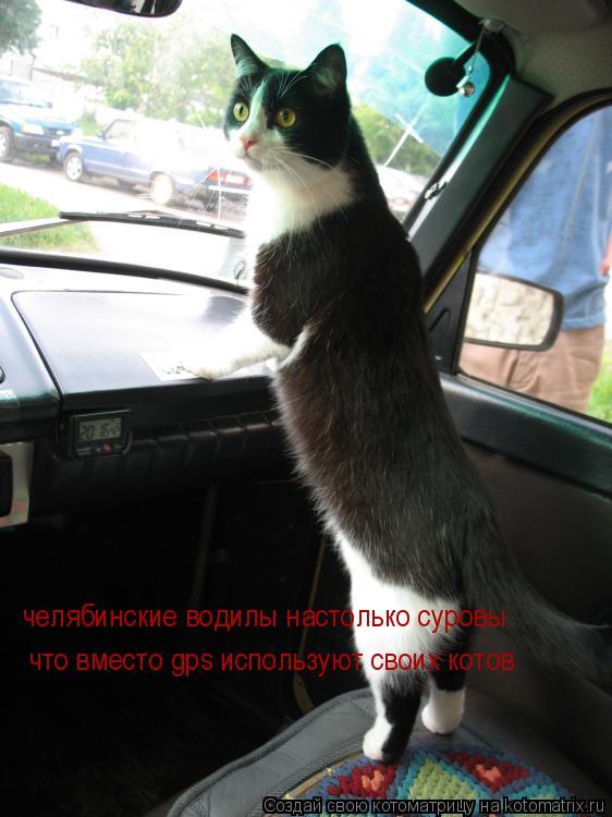 Котоматрица: челябинские водилы настолько суровы что вместо gps используют своих котов