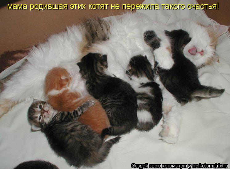 Котоматрица: мама родившая этих котят не пережила такого счастья!