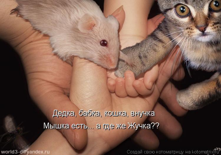 Котоматрица: Дедка, бабка, кошка, внучка Мышка есть... а где же Жучка??