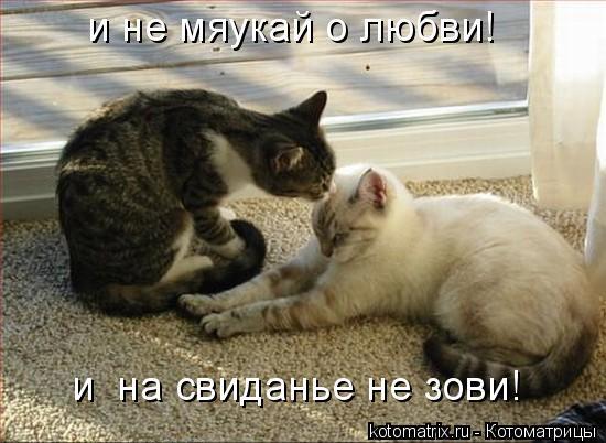 Котоматрица: и не мяукай о любви! и  на свиданье не зови!