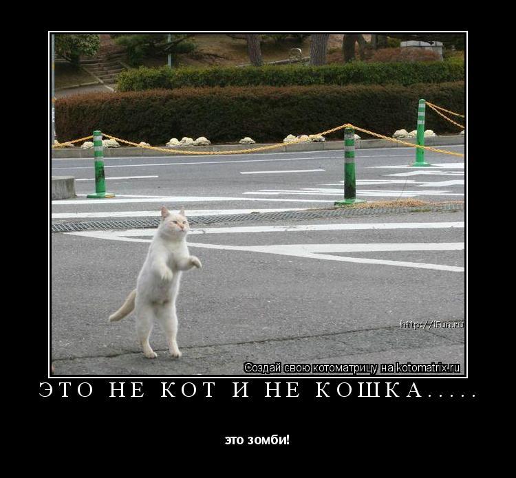 Котоматрица: это не кот и не кошка..... это зомби!