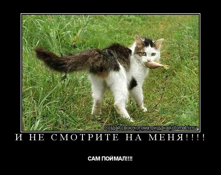 Котоматрица: И НЕ СМОТРИТЕ НА МЕНЯ!!!! САМ ПОЙМАЛ!!!!