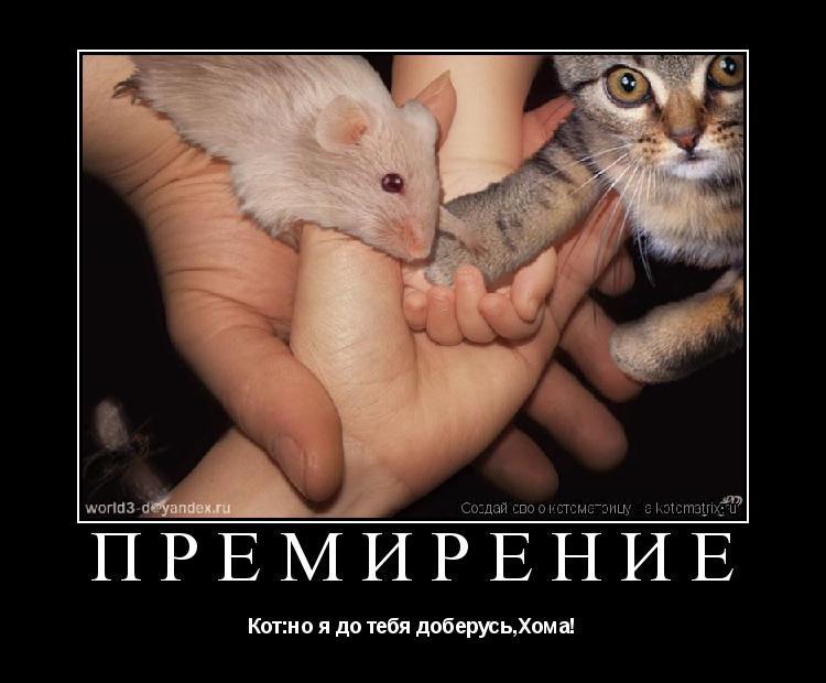 Котоматрица: Премирение Кот:но я до тебя доберусь,Хома!