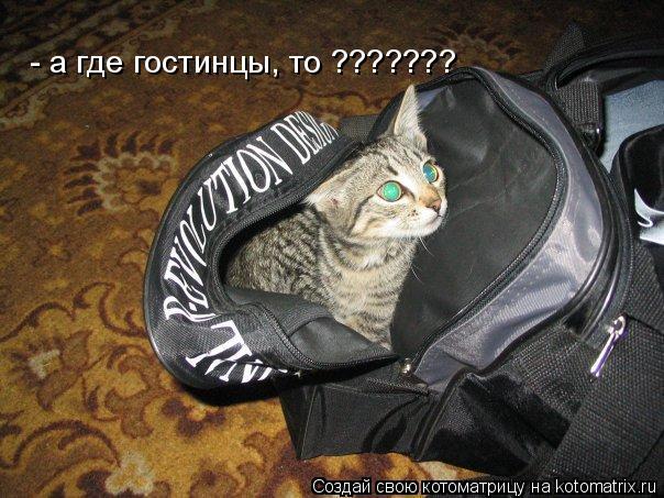 Котоматрица: - а где гостинцы, то ???????