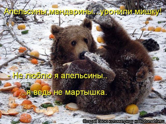 Котоматрица: Апельсины,мандарины...уронили мишку!  - Не люблю я апельсины.. ..я ведь не мартышка.
