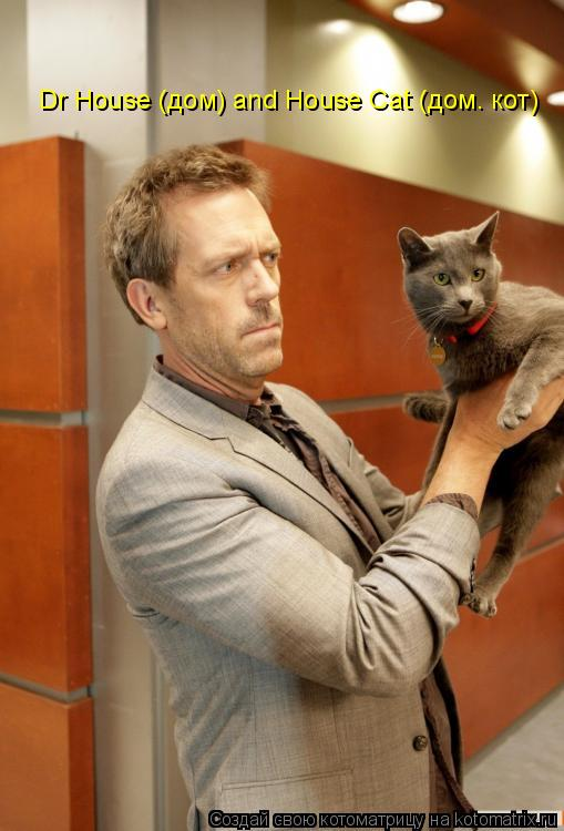 Котоматрица: Dr House (дом) and House Cat (дом. кот)