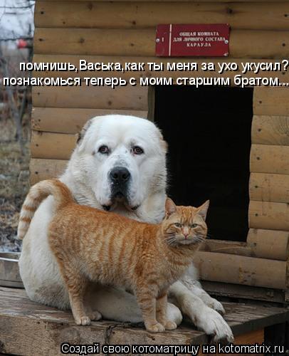 Котоматрица: помнишь,Васька,как ты меня за ухо укусил? познакомься теперь с моим старшим братом...