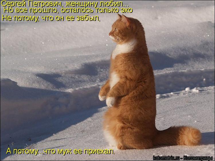 Котоматрица: Сергей Петрович, женщину любил... Сергей Петрович, женщину любил... Но все прошло, осталось только эхо Не потому, что он ее забыл, А потому...что