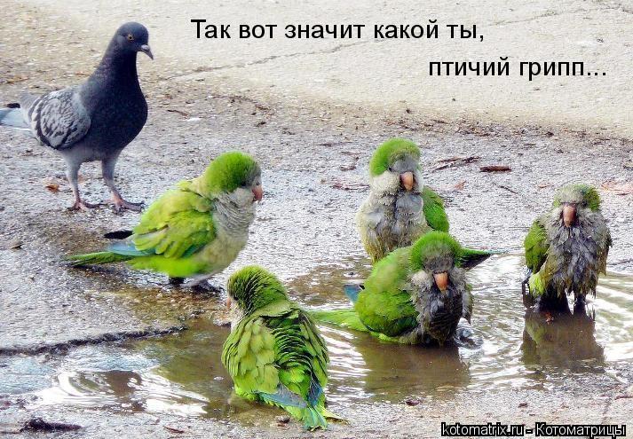 Котоматрица: Так вот значит какой ты,  птичий грипп...