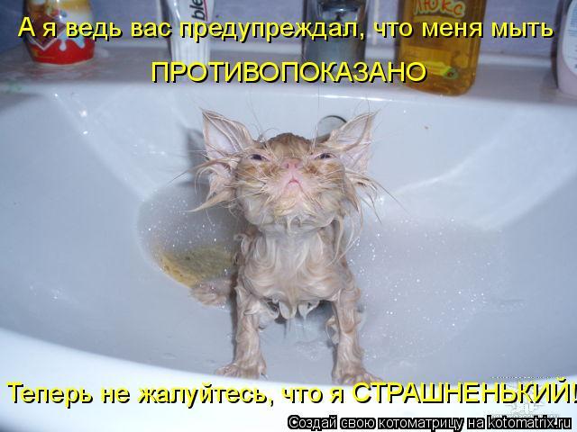 Котоматрица: А я ведь вас предупреждал, что меня мыть ПРОТИВОПОКАЗАНО Теперь не жалуйтесь, что я СТРАШНЕНЬКИЙ!