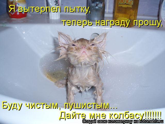 Котоматрица: Я вытерпел пытку,  теперь награду прошу, Дайте мне колбасу!!!!!!! Буду чистым, пушистым...