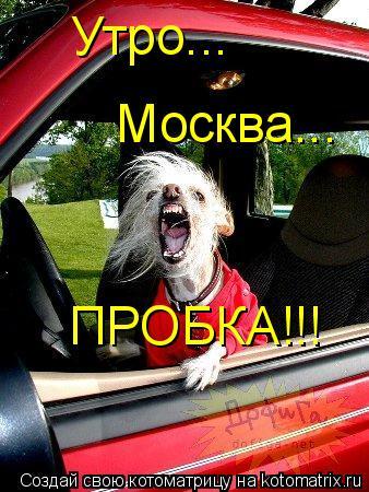 Котоматрица: Утро... Москва... ПРОБКА!!!